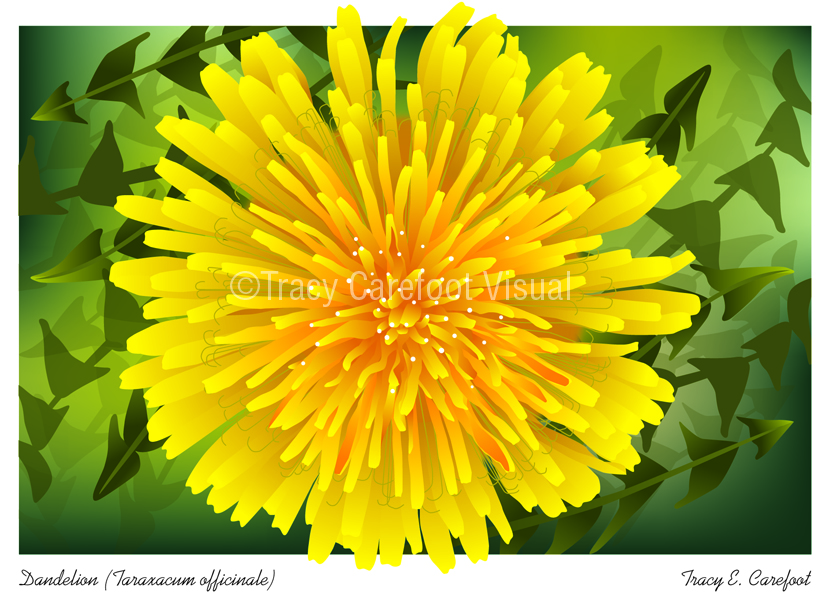 Series of greeting cards of Gatineau wildflowers